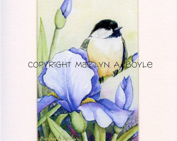 8 x 10 inch MATTED PRINT - CHICKADEE and irises; 5 x 7 image in a white mat, ready to frame in 8 x 10 inch, from original art, wall art