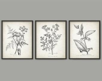 Vintage Botanical Print Set Of 3 - Vintage Plant Decor - 1790 Plant Illustration - Botanical Art Print - Plant Book Plate Prints - AB663