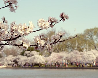 Washington DC photography Cherry Blossom festival, cherry blossom art, pale mint pink spring nature print, washington dc wall art picture