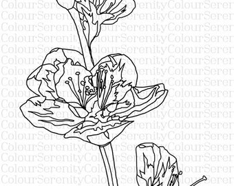 Flowers Printable Instant Download Adult Coloring Page #24