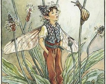 The Ribwort Plantain Fairy - Counted cross stitch pattern in PDF format