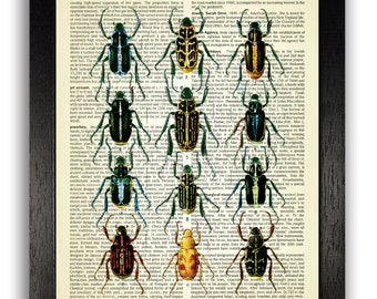 Bug illustration etsy beetles art print insect group poster insect diagram illustration wall decor bug print ccuart Images