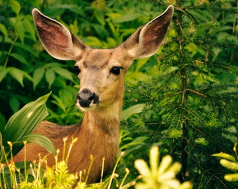 mountain animal deer nature photography print, wall decor