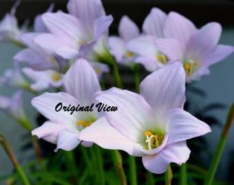 Home Decor Photography Purple Flowers