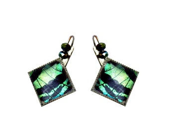 "Real butterfly wings ""Green Square"" earrings"