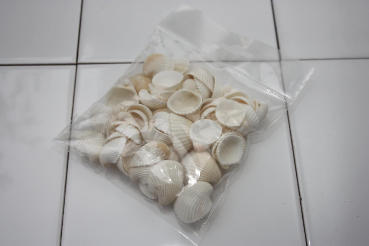 bag of 50 white cockle sea shells natural decor and craft
