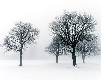 Winter Trees in Fog - SKU 0228