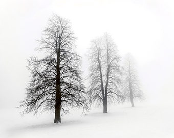 Winter Trees in Fog - SKU 0226