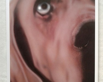 Artwork Print A3 Close Up Weimaraner Dog Picture