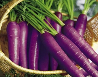 Carrot Purple Haze Vegetable Seeds (Daucus carota) 100+Seeds