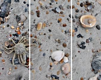Shore Clutter (split photo panels)