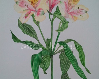 """Original Botanical Watercolor Painting of Yellow and Pink Peruvian Lily Flower 11"""" x 14"""""""
