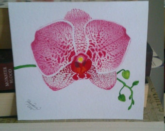 Three Pink Phalaenopsis Orchid Cards