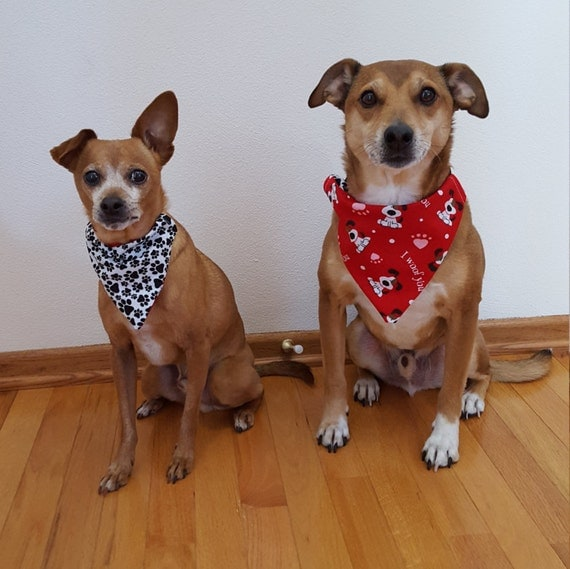 "Valentine's Reversible Dog Bandana, Dog Fashion Collar Cover, Valentines Day ""I Woof You"" and Pawprints"