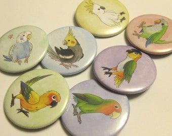 Bird 2.3 Inch Button Set - Parrots
