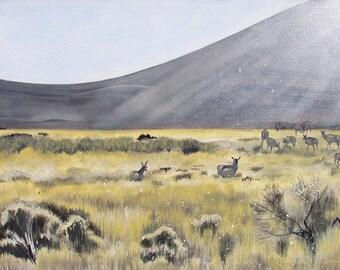 Arizona Pronghorn
