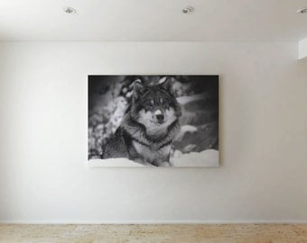 Wolf  - Canvas decor