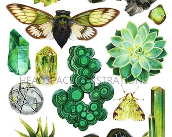 Green Crystal Quartz Succulent Flora Fauna Moth and Cicada - Botanical Art Print by Headspace Illustrations
