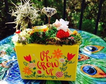 Fairy garden Oh Grow Up