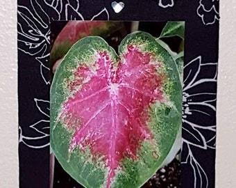 4x6 Wall Hanging - Heart Leaf
