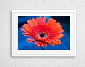 Pink Daisy Art Photo with frame