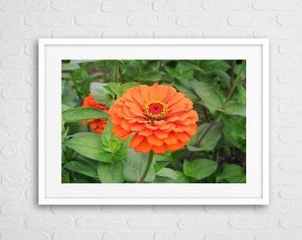 Orange Dalia Art Photo Framed