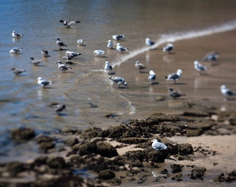 Nature photography - a seagulls on the beach