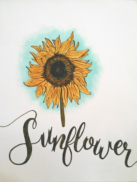Botanical / flower drawing and lettering - Sunflower - Color Drawing - Print - Canvas Giclée