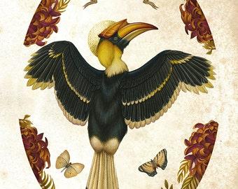 Bird print - Hornbill - Limited Edition Print - Natural history - Nature art