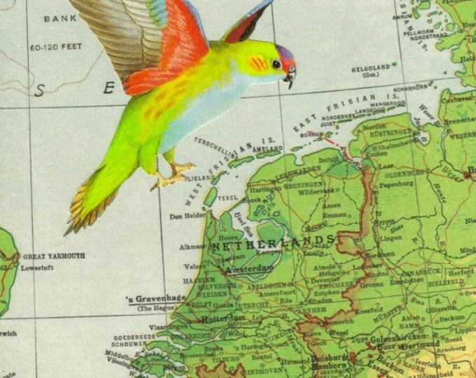 Retro Map Art, World Travel Artwork, Bird Migration