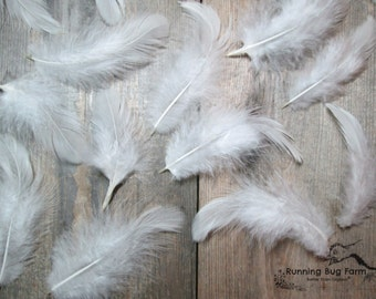 "White Feathers Loose Real Feathers White Wyandotte Rooster Feathers Fluffy Plumes Natural Feathers Real Bird Feathers 25 @ 3 - 3.5"" / WW9"