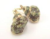 Gold Turban Shell Earrings, Beach Jewelry Gold Earrings, Organic Earrings