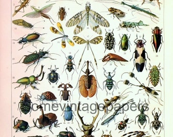 """Beautiful insects dictionnary plates digital files antique french encyclopedia 9x12"""" instant download"""