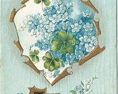 Blue Forget Me Nots & Green Shamrocks The Language of Flowers Vintage Postcard