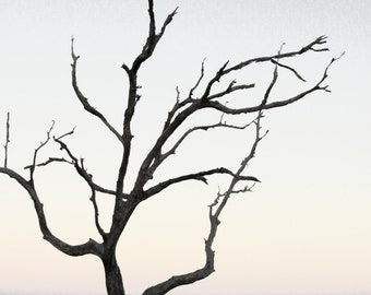 Minimalist Art Beach Photography | Beach House Decor | Driftwood Tree, Horizon, Sea, Sunset | Pink Orange Blue Purple Sky or Black and White