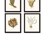 Plants of the Sea Print Set No.2, Seaweed Prints, Wall Art, Art Prints, Beach Cottage Decor, Nautical Art, Art Print, Illustration, Giclee