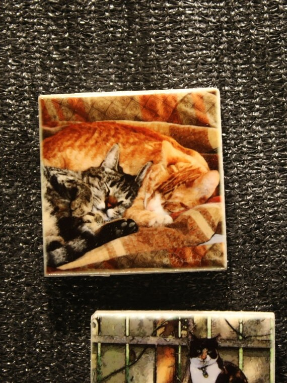 "Magnet - Cats ""Best Friends""  1.75in x 1.75in"
