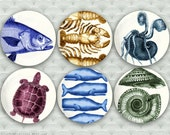Marine zensations, original marine melamine plate