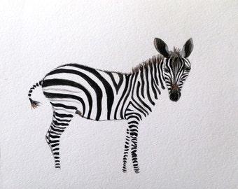 Zebra - Original Watercolor Painting