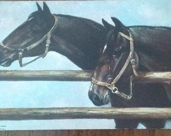 Antique 1909 HORSE Postcard Artist signed postmarked
