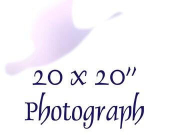 20x20 Photo ~ Large Art ~ Square Wall Decor ~ Personalized Custom Enlargement, Nature Photography, Black and White Botanical Animal Abstract
