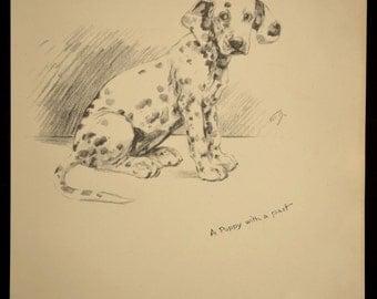 Dalmation Print Dog Print Dalmation Puppy Drawing Illustration