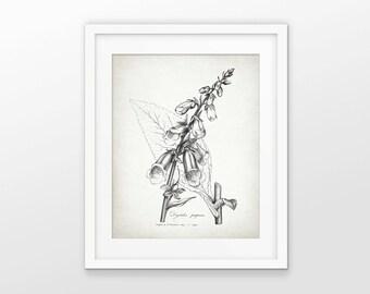 Antique Botanical Print - Foxglove Plant Illustration - Digitalis Purpurea - Botanical Flower Art - Single Print #1694 - INSTANT DOWNLOAD