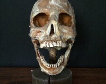 Haunted Halloween Prop Skull With Rustic Wooden Display Stand