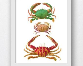 Vintage Crab Artwork, Prints of Crabs Marine Art, Beach Digital Print,Crab Pictures,Orange Crab Prints,Beach Crab Print, Sea Life Print