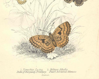 1855 Antique Butterfly Print Hand Colored Jardine Naturalist's Library Entomology