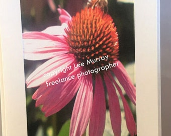 Greeting Card - Pink Cone Flower with Bee