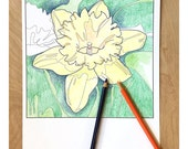 daffodil flower art coloring pages, instant download coloring sheet, adult coloring page