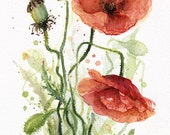 Red Poppy Flower Watercolor Painting, Giclee Art Print, Floral Print,