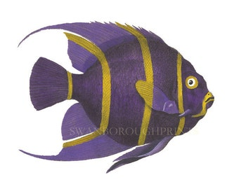 Tropical Fish Prints. Purple Chaeton Fish Print. Bright and Colorful Powder Room or Bathroom Print. Purple Coral Reef Fish Wall Art
